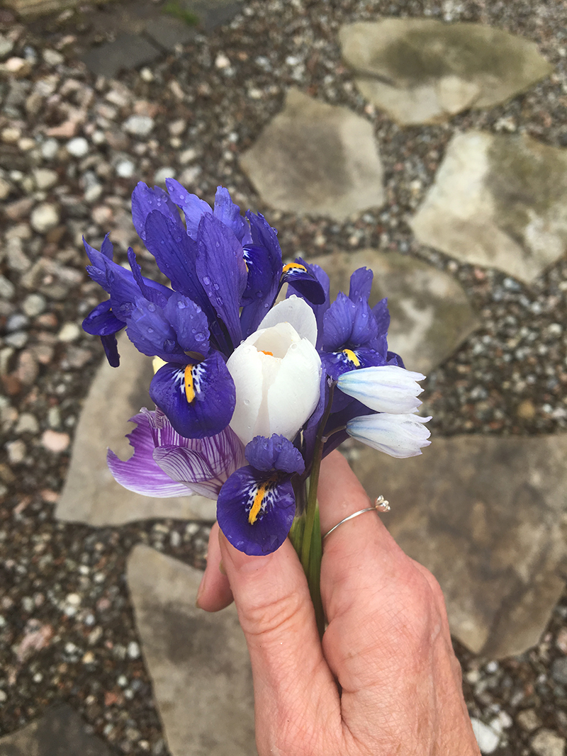 Tiny bouquet of dwarf irises, crocuses and scilla