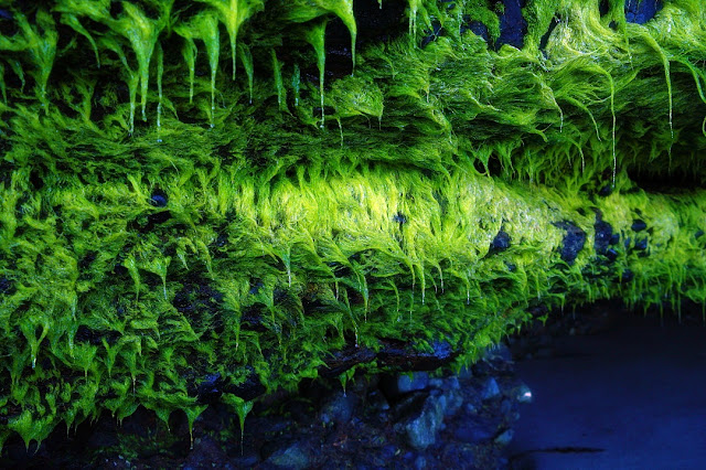 Neon green cave plant life...
