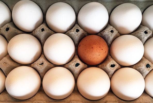 Afinal, ovo faz bem ou não?