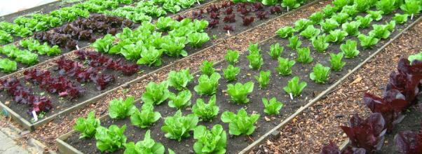 Manfaat Hobi berkebun organik untuk bisnis, kesehatan, dan melestarikan alam