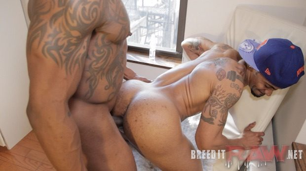 Breed Hard 6