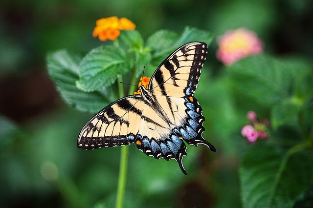Kemenuh Butterfly Park - Batubulan, Celuk, Mas, Ubud, Kemenuh, Tegenungan Village, Bali