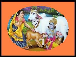 जानिये गाय का दूध क्यों माना जाता है अमृत समान? Gau ka dudh amrit ke brabar kyo kahaa jata hai?