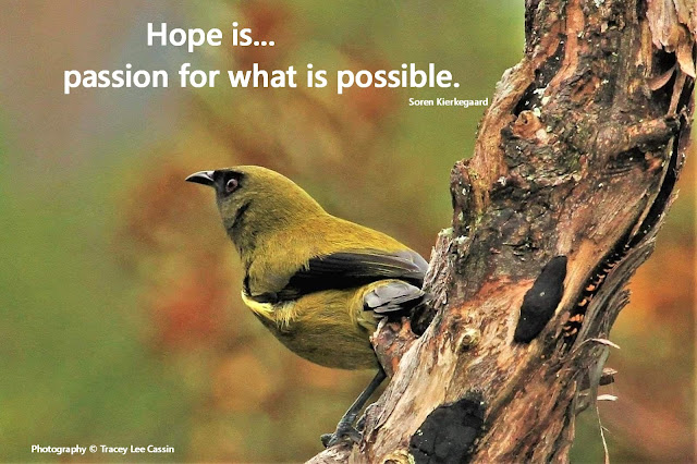 Hope Is Quote