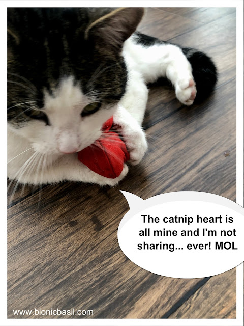 Melvyn and the catnip heart @BionicBasil® 8 Things About...