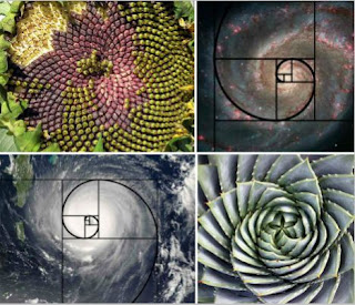 The golden ratio is the rate at which things grow from within.