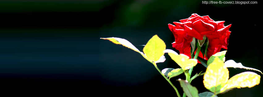 Dark Red Rose FB timeline Cover