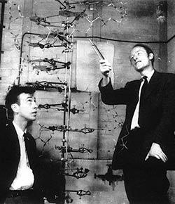 Watson dan Crick adalah penemu struktur DNA double helix