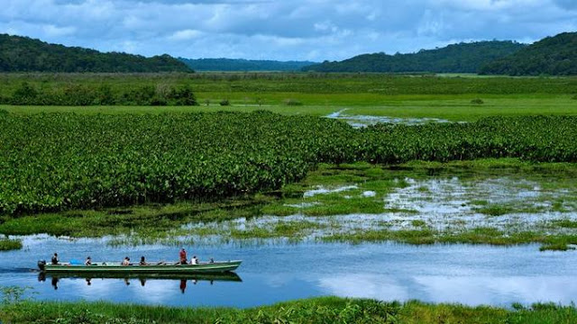 Pirogue dans un marais dans la Réserve naturelle de Kaw-Roura en Guyane