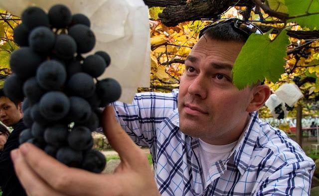 Arti mimpi buah anggur melihat makan ungu merah