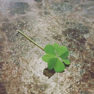 st. patrick's day, irish, 4 leaf clover, lucky, good luck