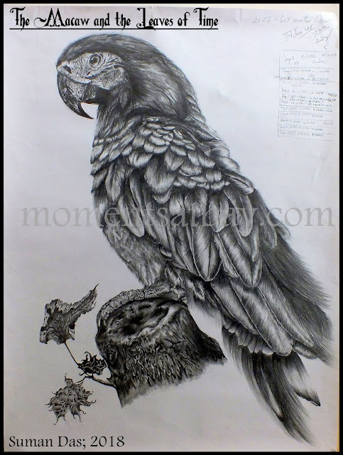 The Macaw, and the Leaves of Time: my pencil sketch