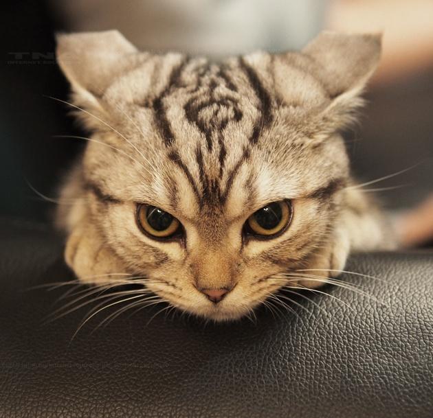 photographie de chat
