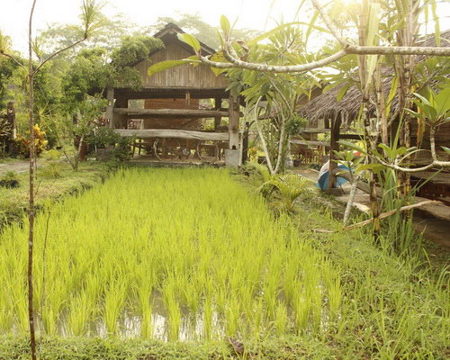www.Tinuku.com Kampoeng Jelok Resort applying nature concept in rice fields, river, rustic architecture and culinary countryside