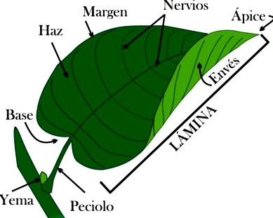 Imagen de la hoja indicando partes para niños