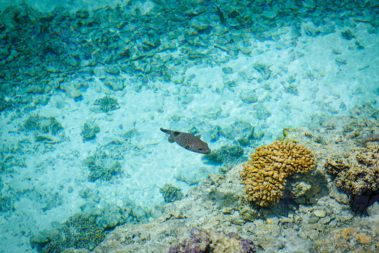 環遊世界|大溪地|艾美酒店海龜保育中心 Le Meridien Bora Bora Turtle Center