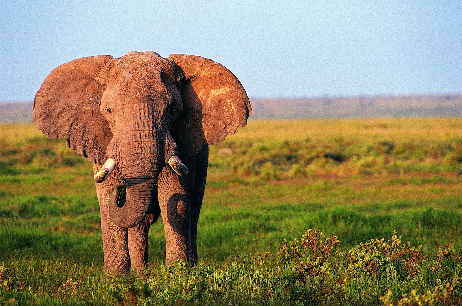 Beautiful Pictures Of Elephant In Hd