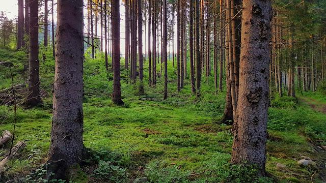 Карпаты, Украина, горы, пейзаж, лес, природа, Буковель, путешествия, походы, отпуск, Ukraine, Carpathians, nature, travel, journey, landscape, forest,  mountains,