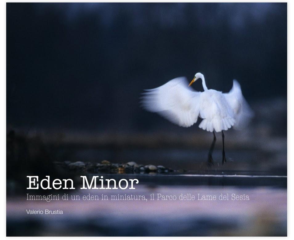 EDEN MINOR