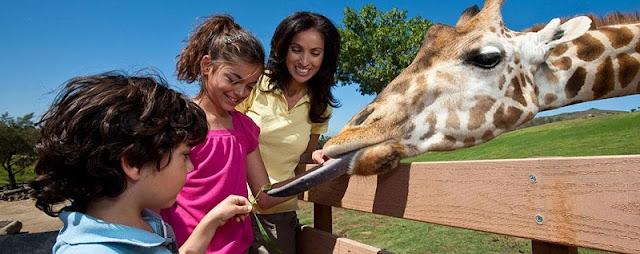 Passeios com crianças no Zoo Safari Park em San Diego