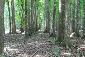 Hutan sebagai Reservior Hujan
