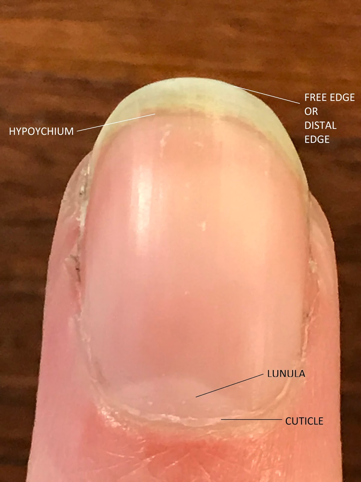 MadameRedd: Anatomy of a Nail + Basic Care