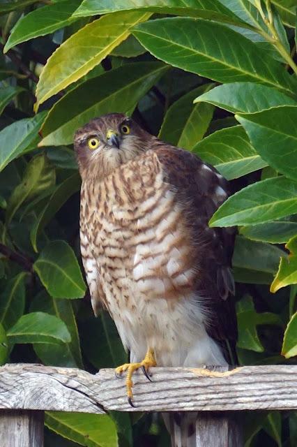 birds, wildlife,