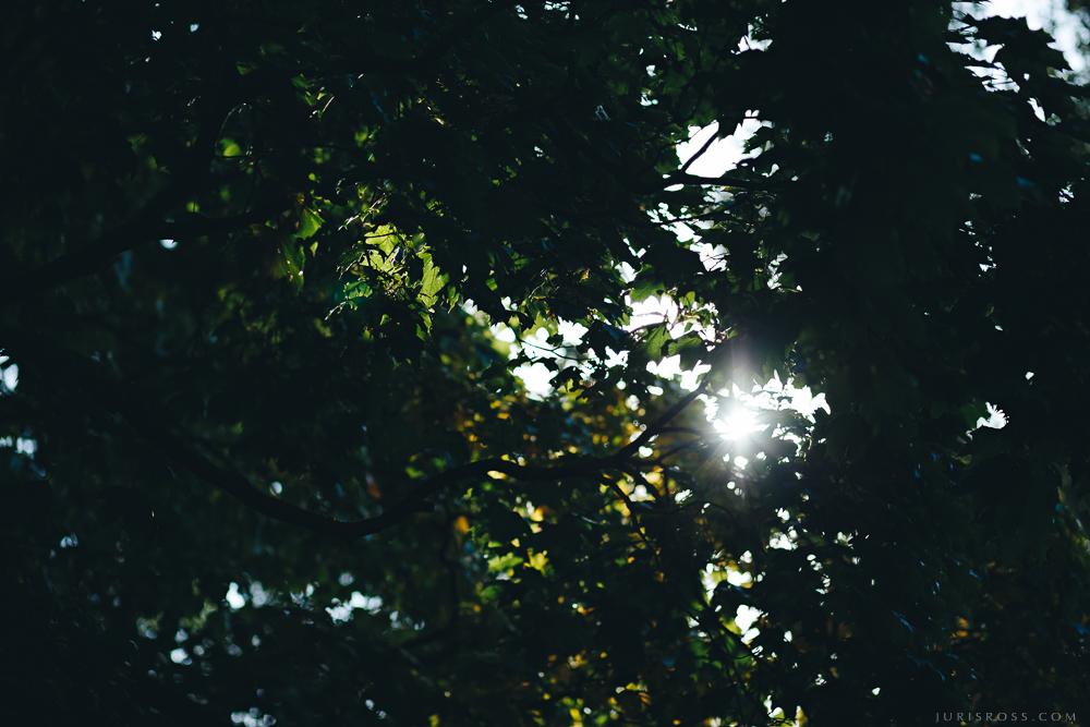 rīgas parku koki