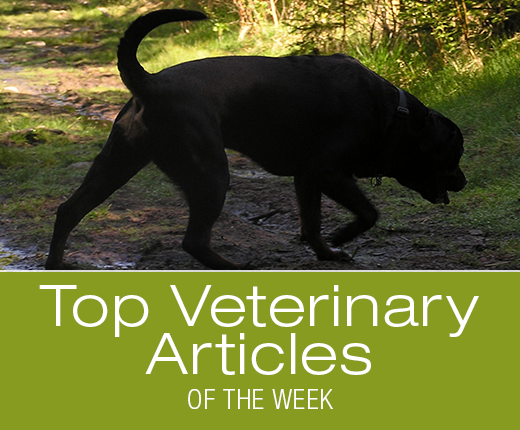 Top Veterinary Articles of the Week: Lyme Study, Tick-Borne Infections Screening, and more ...