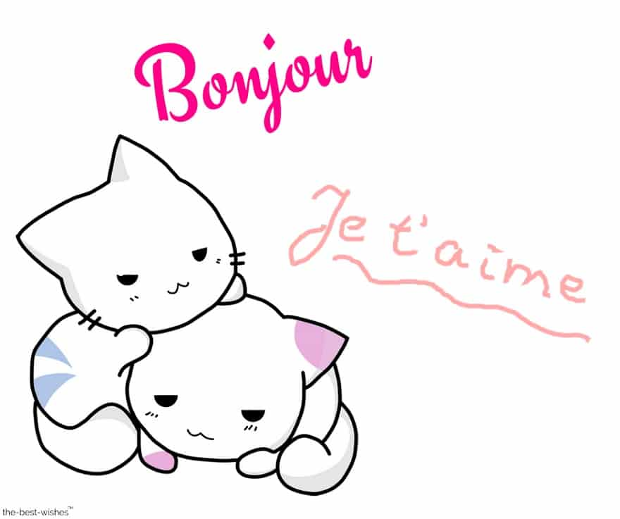 cute cats morning love you
