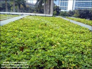 JUAL RUMPUT, RUMPUT TAMAN, KOLAM IKAN KOI, TUKANG TAMAN JAKARTA, GRASS SEED