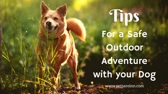 Outdoor Dog Safety