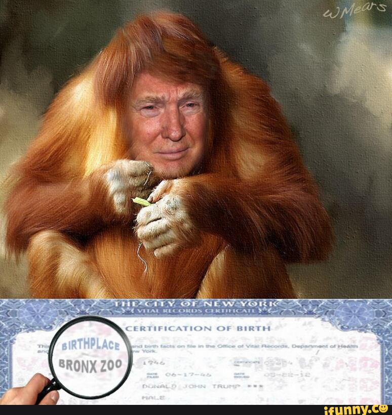 BILLIONAIRE GAMBLER™: Donald Trump related to orangutan?