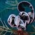 Colorful Sea Creatures Of Libas Reef In Buenavista