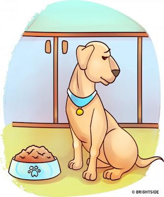 Nếu thấy vật nuôi đột ngột bỏ ăn và uống nước thì bạn nên đưa các em đi khám càng sớm càng tốt nhé.