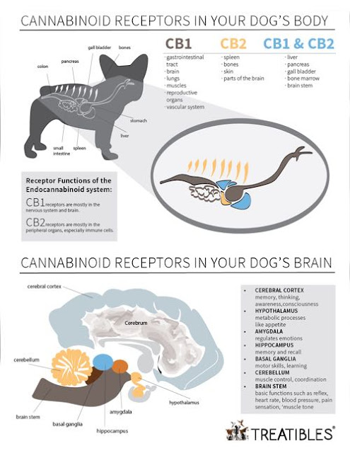 A look at cannabinoids in your dog's body, by Treatibles.