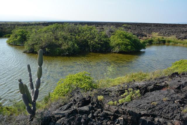 Lave Hike Punta Moreno
