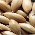 Esta semilla tiene en pánico a los doctores, te ayudará a controlar la diabetes y restablecer 100% de su función hepática y renal