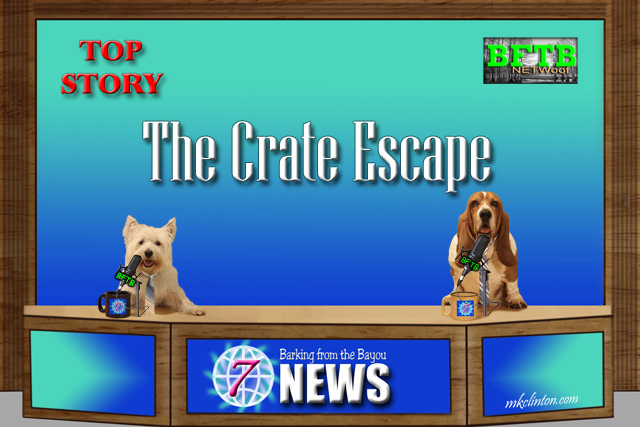 BFTB NETWoof News with two dogs hosting