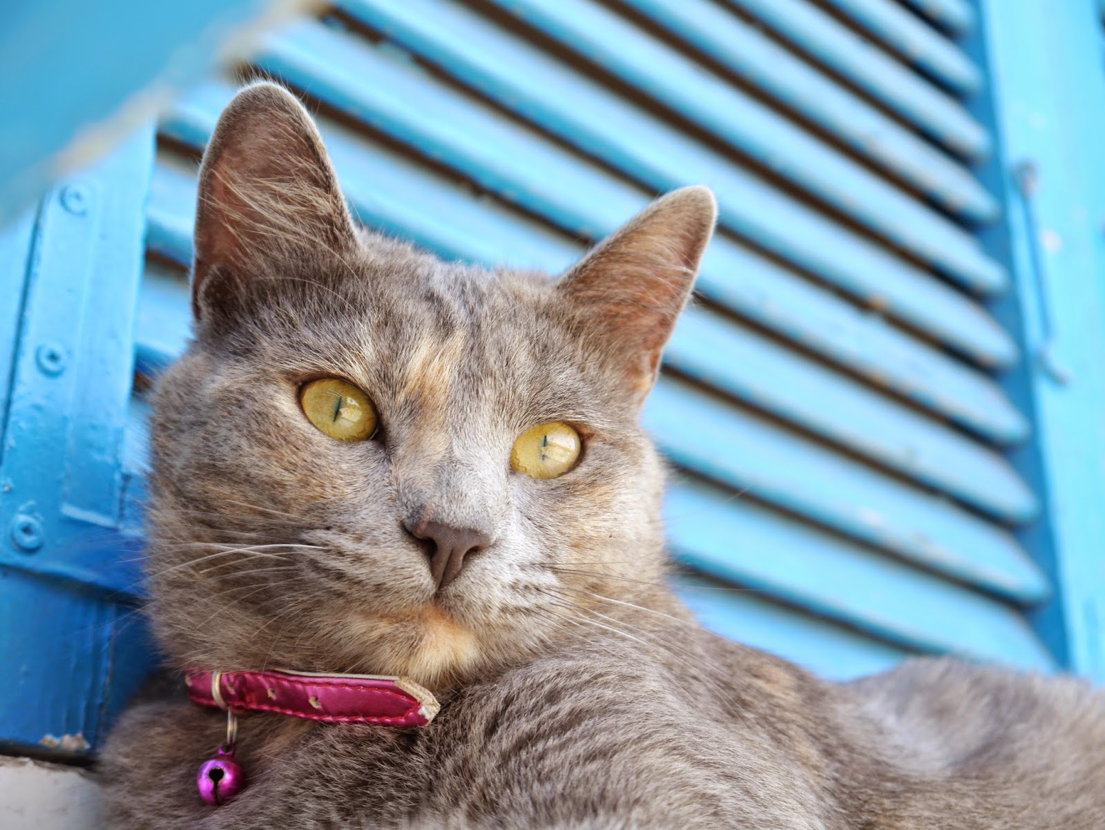 photo of a grey cat