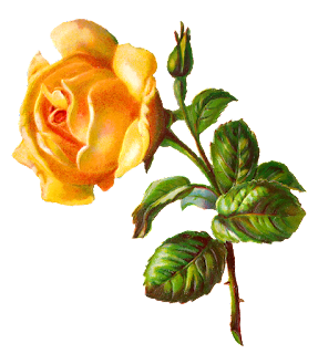 flower rose illustration digital image