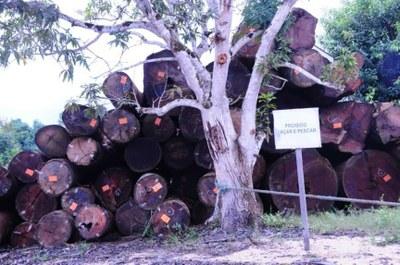 MPF pede suspensão do selo FSC, concedido pelo Imaflora às madeireiras Ebata e Golf
