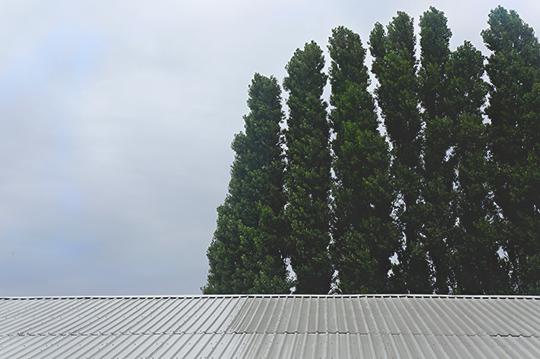urban photography, nature, industrial, trees, roof, urban photo, Sam Freek, contemporary photography, art,