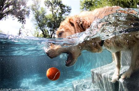 Underwater Dog Photography Seth Casteel-1