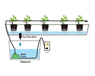 Cara Bertanam Hidroponik bagi Pemula Dirumah