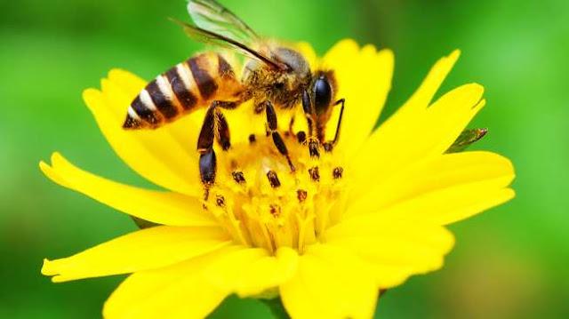 Ternyata, Cara Berkomunikasi Lebah Telah Dijelaskan dalam Alquran dan Sains