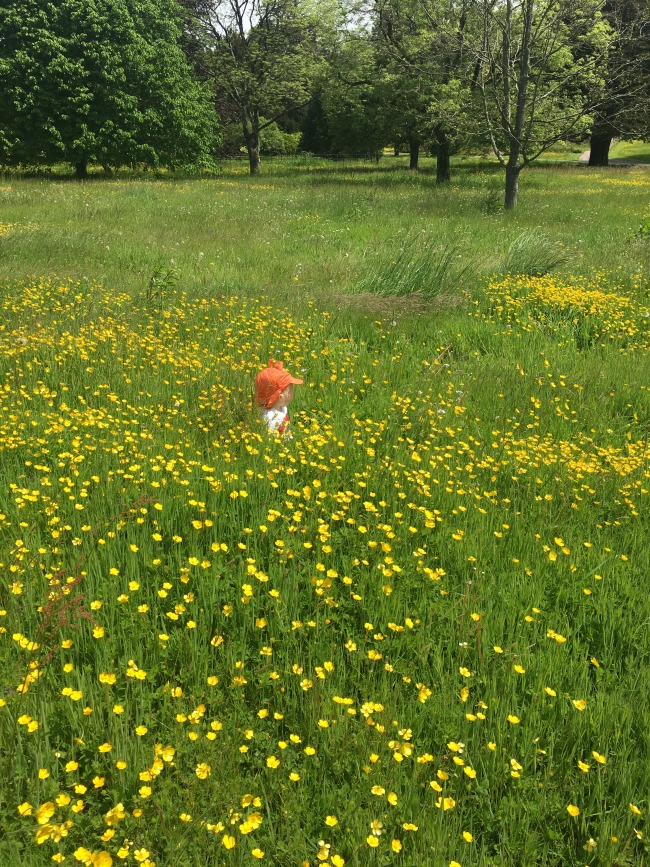 toddler-sat-in-field-of-buttercups-at-Dyffryn-Gardens
