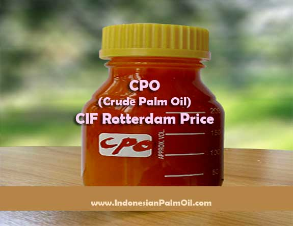 cpo crude palm oil cif rotterdam price
