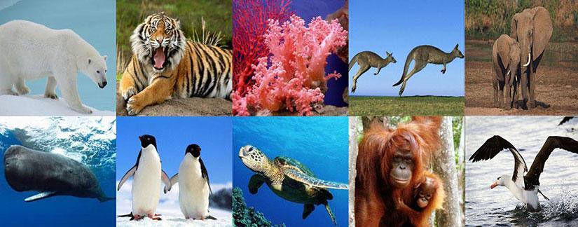 Animales en peligro de Extinción en el Mundo
