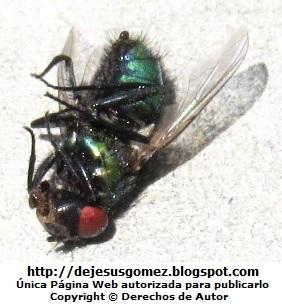 Foto de mosca muerta en el piso de Jesus Gómez